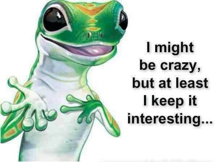 Geico Quote 22 Best Geico Lizardhe's So Cute Images On Pinterest  Geico