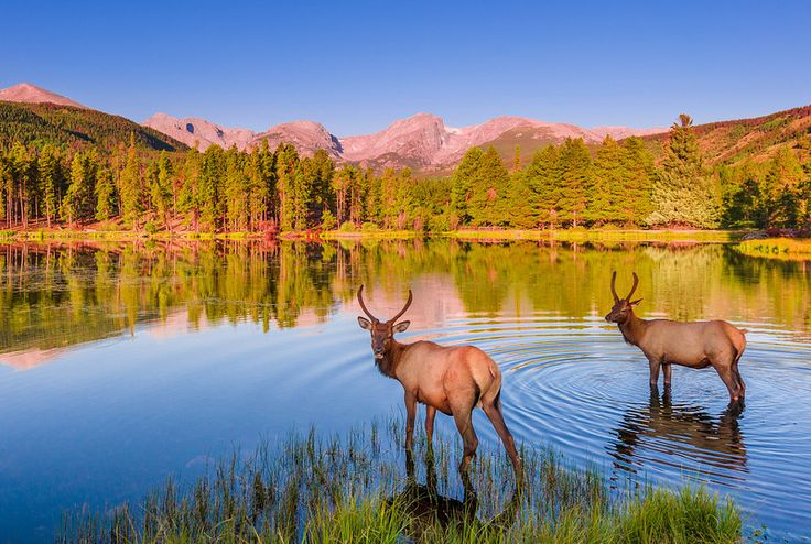 COLORADO This post covers our tips for visiting Rocky Mountain National Park, and our top 5 picks for things to do in the park. Located within driving distance of Denver, Colorado, Rocky Mountain National Park is one of the best 'getaway' National Parks you can visit. Its main park loop is easy to navigate providing short …
