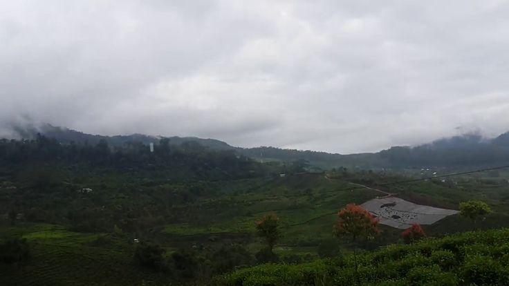 Tea Garden View from A Roasted Corn Shop Alahan Panjang - Padang Road https://youtu.be/JQMmJp6PWJs