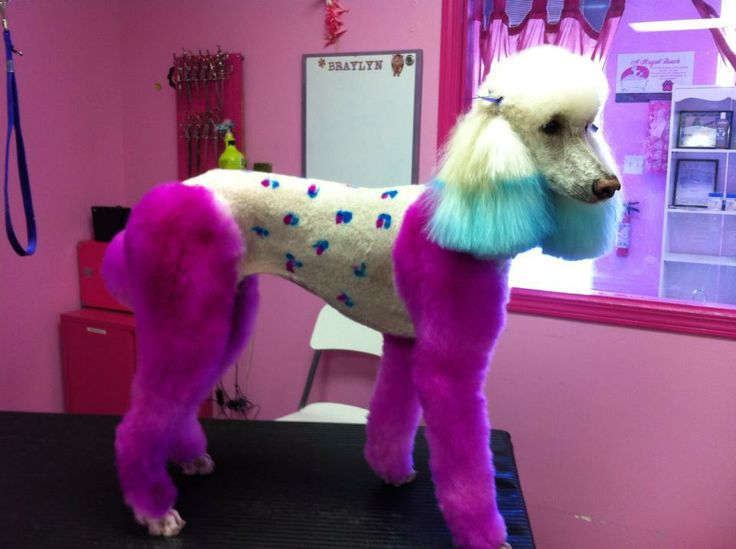 Repinned Dog Hair Dye Grooming By Sarah Gordon And