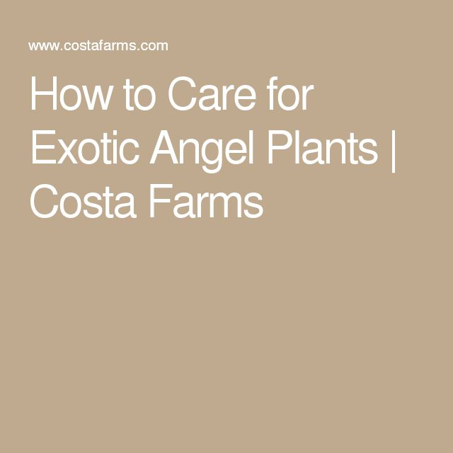 14564 best exotic plants images on pinterest exotic for How to take care of exotic angel plants