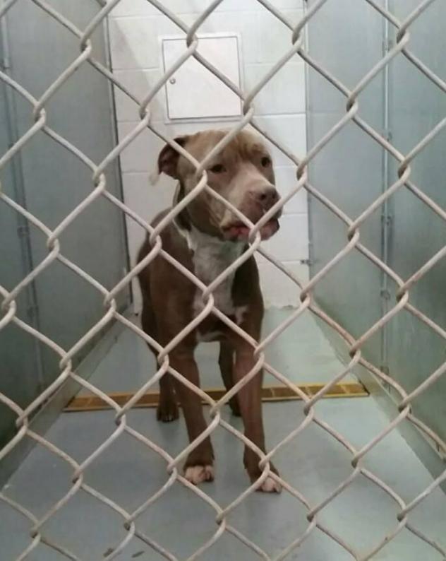 Not Spayed Adopt Ohio  Dog