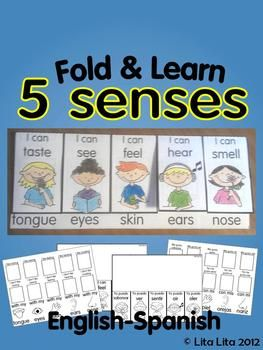 5 senses fold and learn English & Spanish: Learn English, Sense Folding, English Spanish, Kindergarten English Education, Learning English, Kindergarten Sense, Kindergarten 5 Sense, 5 Sense Kindergarten, Learning Spanish