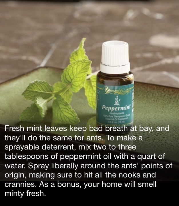 146 Best Images About Young Living Oils On Pinterest