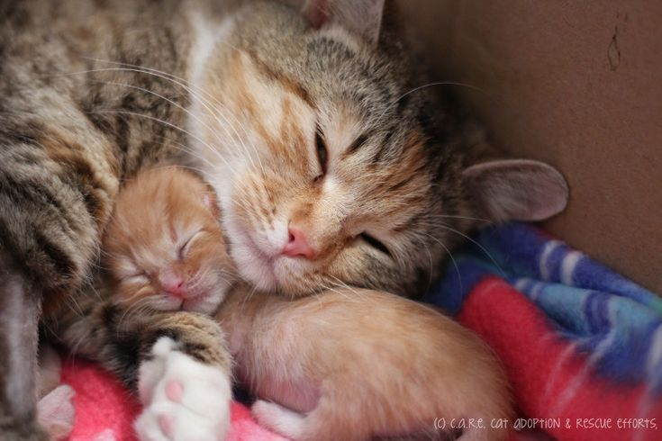 Mama cat saves her tiniest kitten and now can't stop cuddling her. they need a forever home, now.