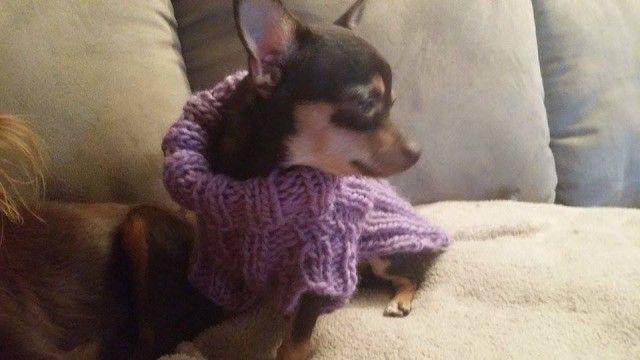 God og varm genser til den lille hunden.