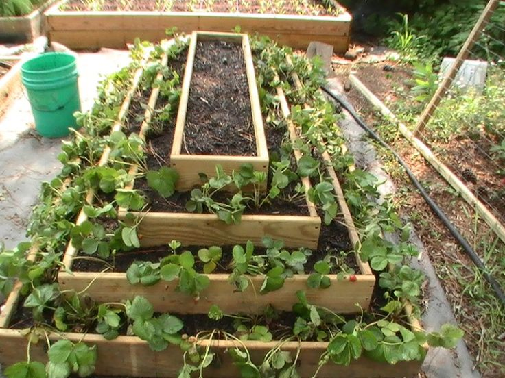 square foot gardening strawberry pyramid