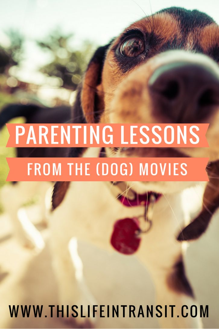 I was about an hour into watching Marley and Me with my kids this morning when it suddenly occurred to me:  This movie about the dog looked an awful lot like this life with the kids.   Boom. Once that thought hit my brain waves, the similarities were everywhere. I began to view all of mom-life and parenting through the lenses of the many dog movies I've watched.  http://www.thislifeintransit.com/parenting-lessons-dog-movies/