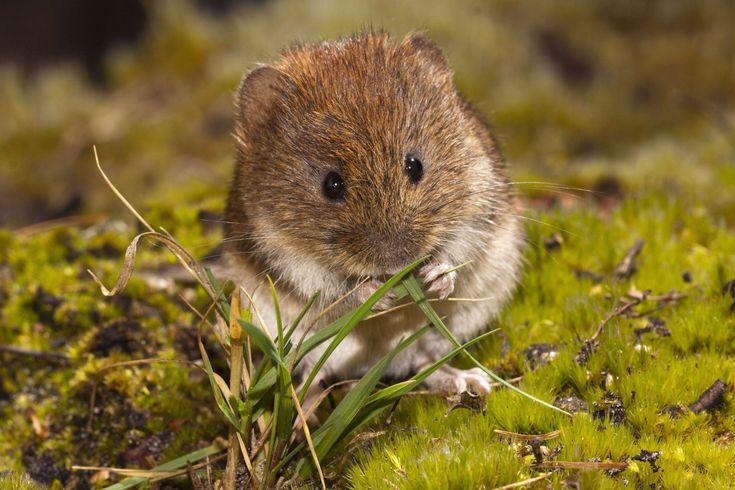 Mäusearten Im Garten