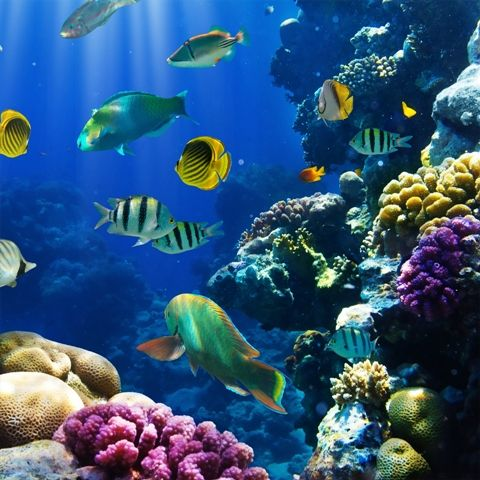 Coral Reef  (pic. attribution) Coral reefs swarm with brilliant colored fish, starfish, giant clams and sea slugs. They are not only beautiful to look at; but they are home to thousands of other species. Coral reefs can be large or small and are some of the oldest ecosystems on the planet. Coral reefs can …