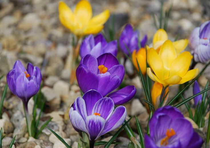 Through the Lens – First colours of spring