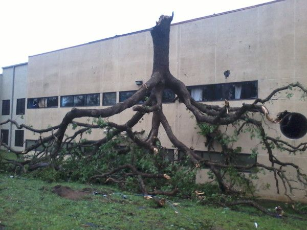 25 Unbelievable Pictures Of The Tornadoes That Hit The Dallas/Fort Worth Area  2.  This is an upside-down tree.