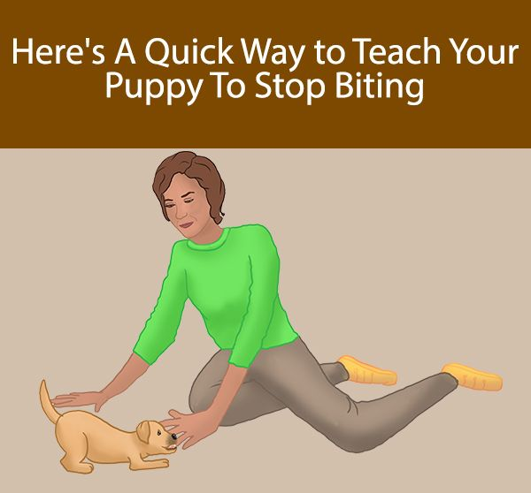 biting puppy a complete guide to stopping puppies biting - 600×558