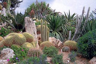 Cactus and Succulent plants | by Swallowtail Garden Seeds