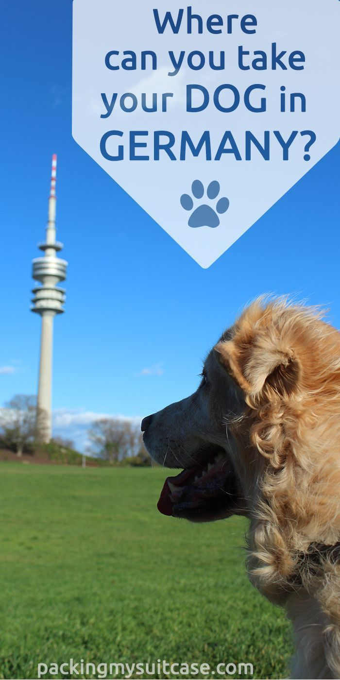 Where Can You Take Your Dog In Germany Dogs Germany Dog Travel