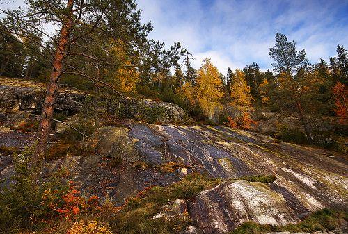 Autumn scenery in Koli. Finland, Sept 2013   www.koli.com.tr www.kolifabrikasi.com