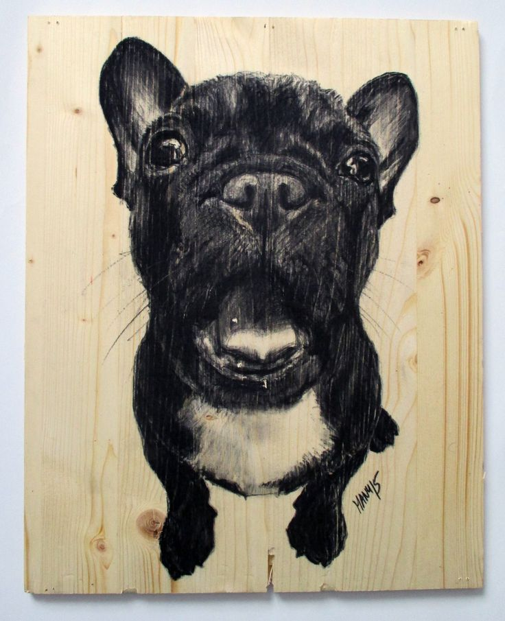 French Bulldog (französische Dogge), charcoal on wood, too cute!