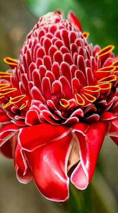 27 best Name that Tropical Flower images on Pinterest ...