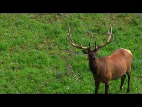 Amazing Animal Adaptations - Microsoft in Education