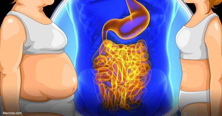 Los beneficios de tener una salud intestinal optimizada se hacen muy evidentes cuando observa como impactan en el aumento de peso, cáncer e inflamación intestinal. http://articulos.mercola.com/sitios/articulos/archivo/2017/10/11/beneficios-de-optimizar-microbioma.aspx