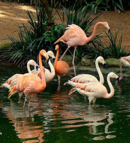 Flamingos 3, via Flickr.