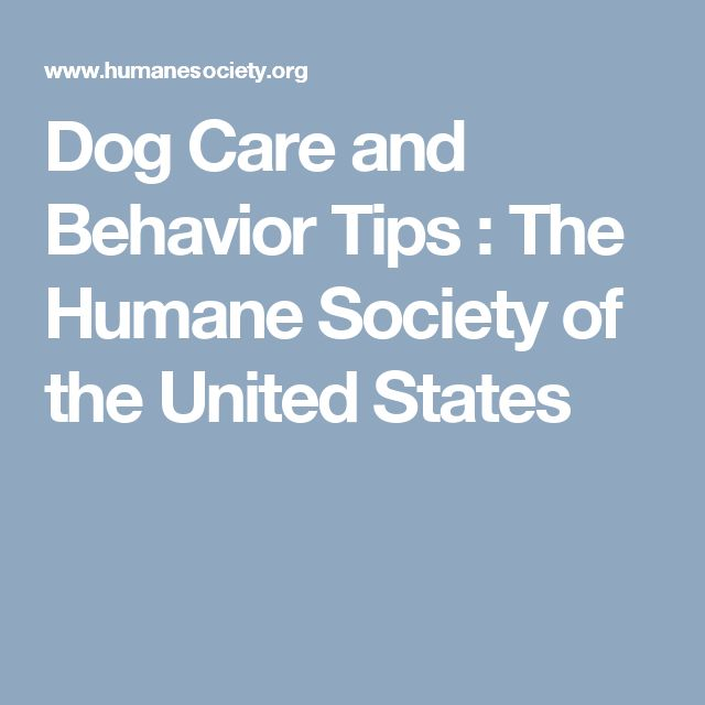 Dog Care and Behavior Tips : The Humane Society of the United States