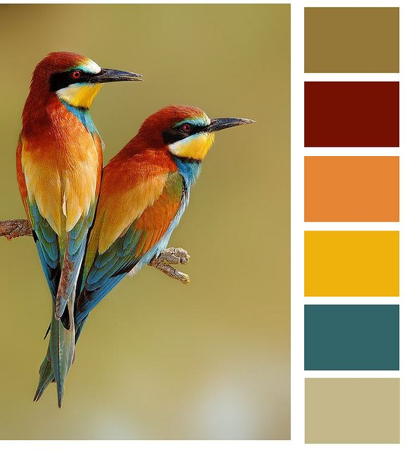 beautiful birds!!...love these colors. MIght use these colors to decorate my apartment: