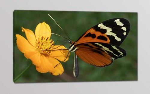 quadro moderno farfalla fiore