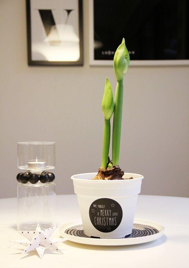 CIRKUS: ruukun pikatuunaus // flowerpot facelift