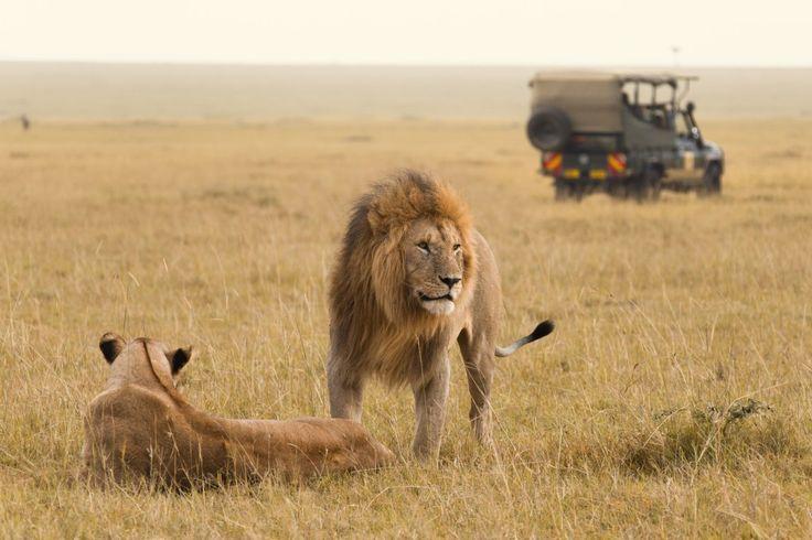 Les om Jambo Tours på reisebloggen - http://www.ticket.no/blogg/reiser-jorden-rundt-med-jambo-tours/ #jambo #tours #reiseblogg #travel