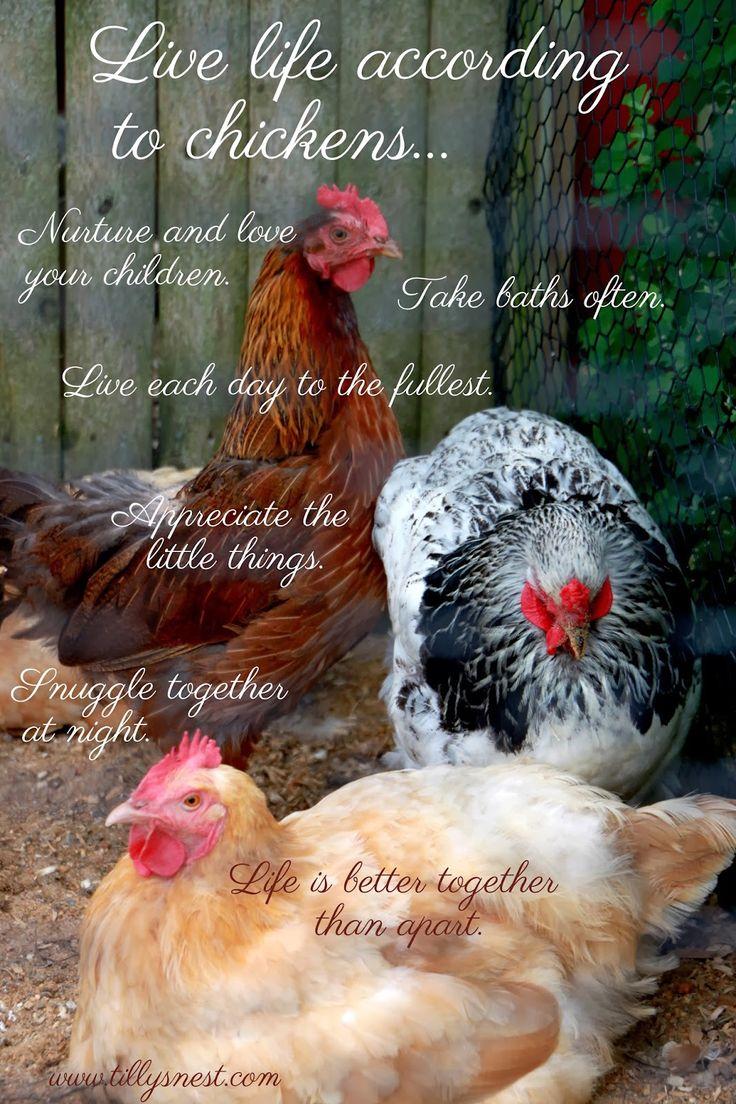 650 best chickens images on pinterest chicken coops chicken