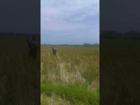 Getar, Jimob & Markus bergoyang di Marabau, pariaman