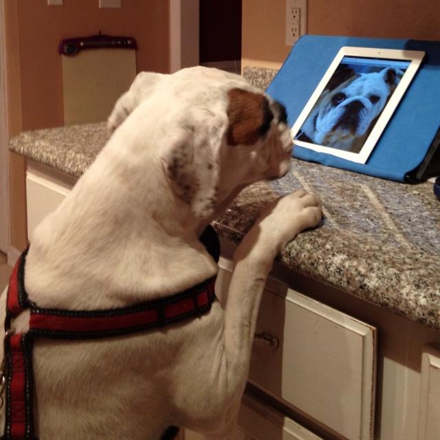 I caught the dog doing FaceTime again.