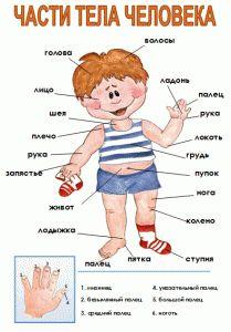 части тела человека для детей