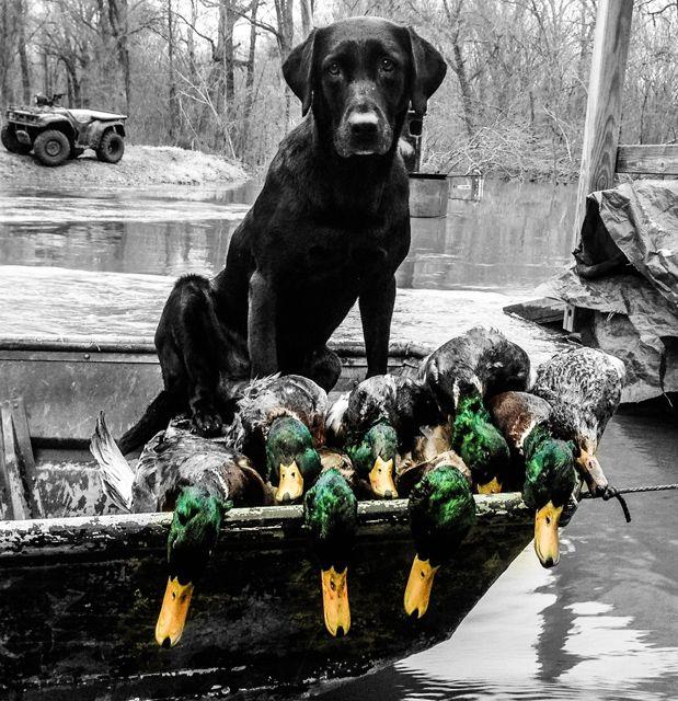 Photos | Greenhead.net | The Arkansas Duck Hunting Magazine