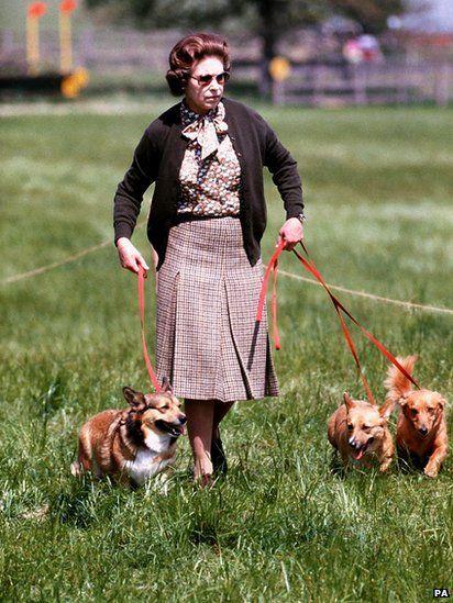 The Queen with her corgis in 1980 #corgi