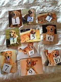 Dog table numbers- wedding