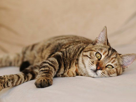 10 Best Emergency Treatment For Cats Images On Pinterest