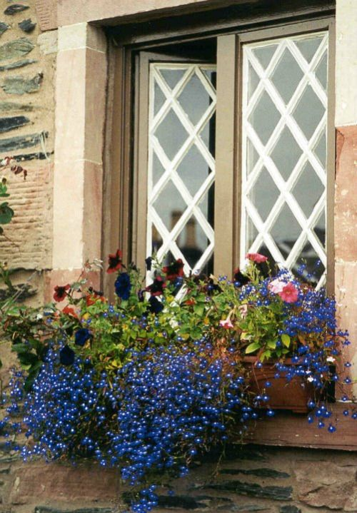 Lattice Window With Blue Lobelia Windowbox .