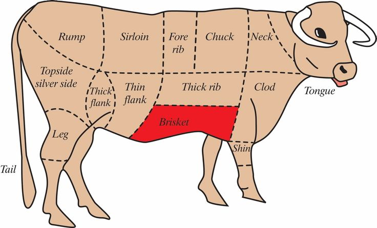Cow Anatomy Diagram: Diagram Of How To Butcher A Beef Cow