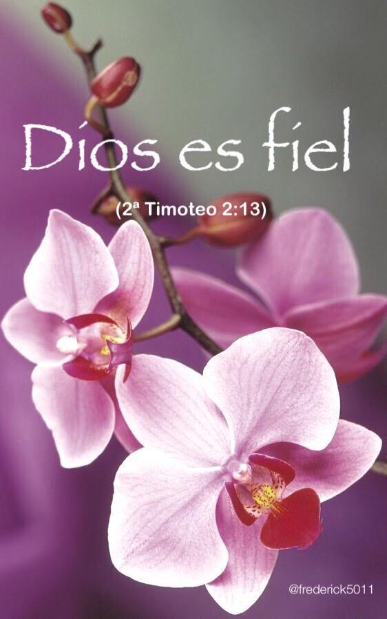 Dios siempre es fiel. Su amor es incomparable y su bondad es eterna.