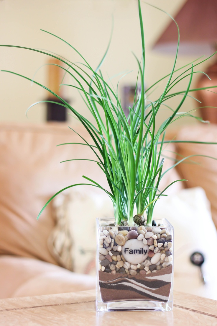 ponytail palm care instructions