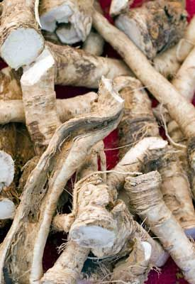 How to Grow Horseradish | Planet Natural   http://www.planetnatural.com/growing-horseradish/