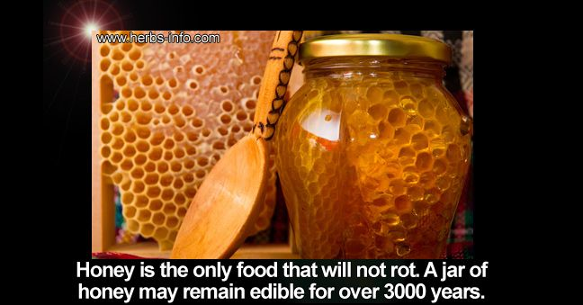 Raw honey is a nutritional treasure chest! It provides vitamins and minerals in abundance. It is considered beneficial to anemia, arthritis (combined with apple cider vinegar), colds, allergies, obesity, parasites, insomnia... [read more]