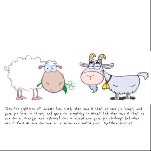 11 best images about Sheep and