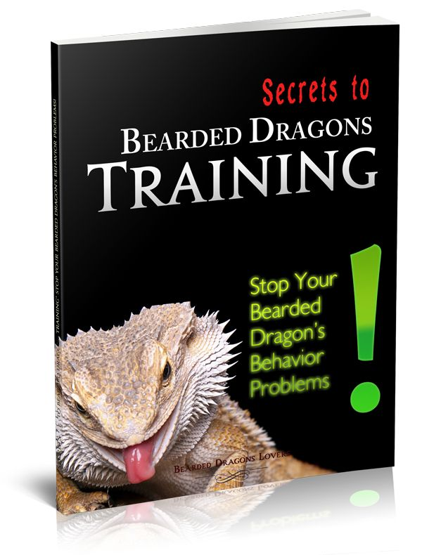 Secrets To Bearded Dragons Training: Stop Your Bearded Dragon's Behavior Problems!