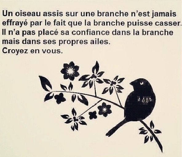 Oiseau confiance en soi #confiance #powerpatate