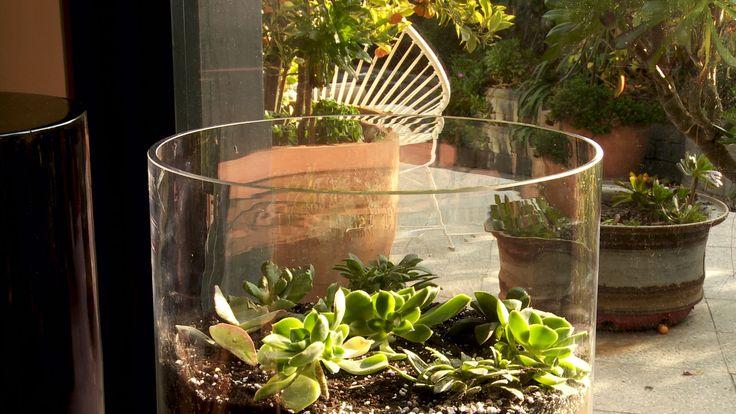Un terrario es un pequeño jardín dentro de un recipiente de vidrio. Allí las plantas necesitan poco mantenimiento y son ideales para las personas con poco tiempo para mantener un jardín. Podemos utilizar una gran variedad de plantas, como cactus, suculentas, helechos o musgos.