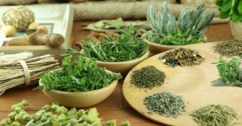 Αυτά τα βότανα σώζουν ζωές!: http://biologikaorganikaproionta.com/health/224767/