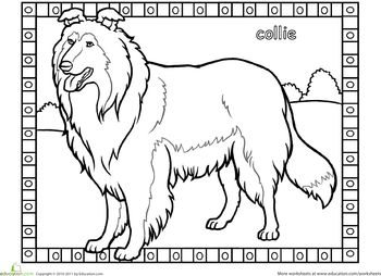Worksheets: Collie Coloring Page